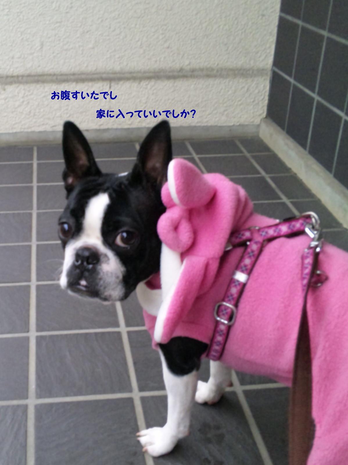 Momo_walk7